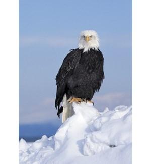 BOXEDCLASSIC/Bald Eagle