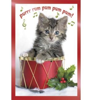 BOXEDCLASSIC/Cat in drum