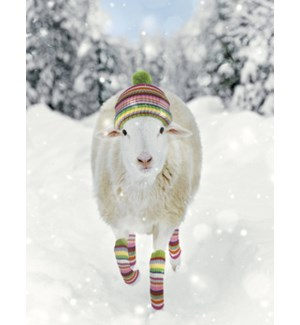 BOXEDNOTE/Sheep in snow