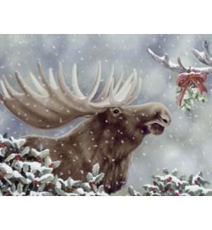 BOXEDNOTE/Moose mistletoe