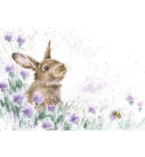 BL/Meadow Rabbit