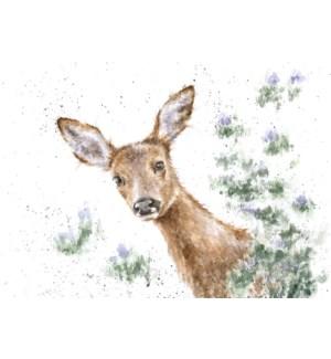 BL/Doe A Deer