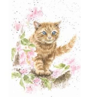 BL/The Marmalade Cat