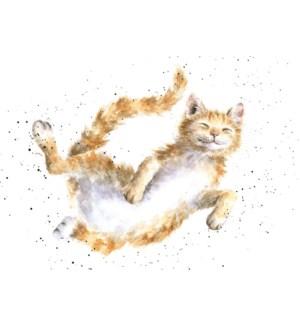 BL/The Cat Nap