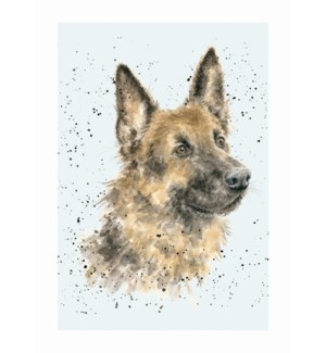 BL/German Shepherd