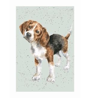 BL/Beagle