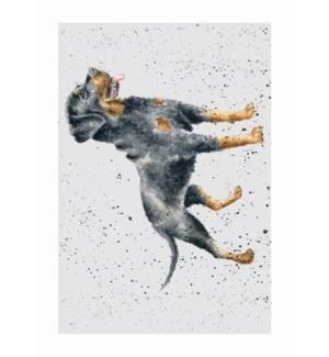 BL/Rottweiler