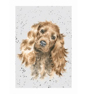 BL/Buff Cocker Spaniel