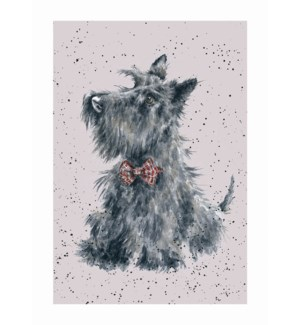 BL/Scottish Terrier