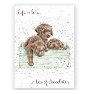 EDB/Box Of Chocolates